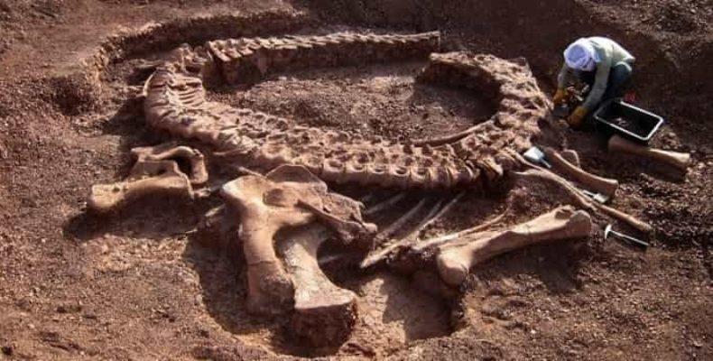 На территории Сибири обнаружили останки ранее неизвестного гигантского динозавра