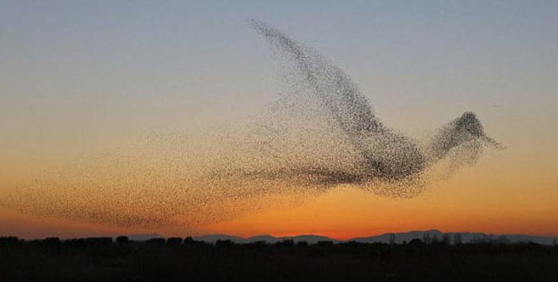 По всему миру отмечаются новые свидетельства появления огромных птиц