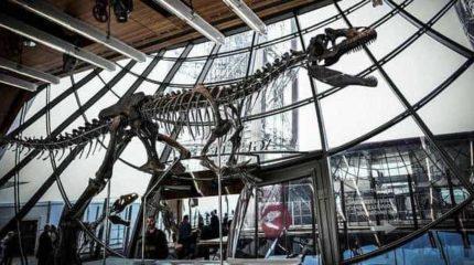 Проданный в Париже скелет аллозавра поставил ученых в тупик