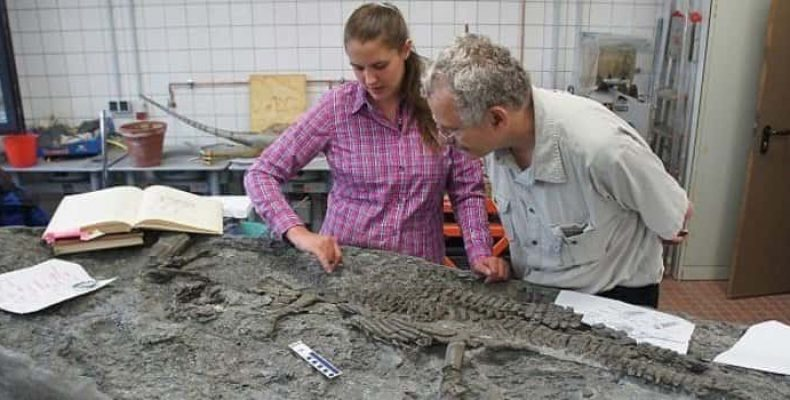 Древнейшие останки плезиозавра открыли новые подробности о виде