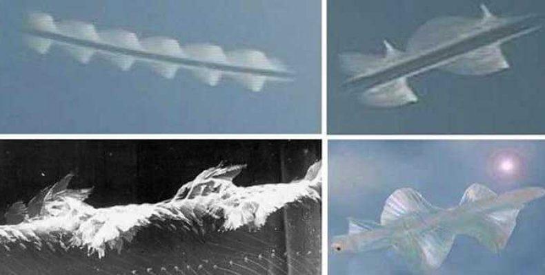 Летающие стержни: много ли известно о «небесных рыбах»