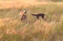 Собака против чупакабры