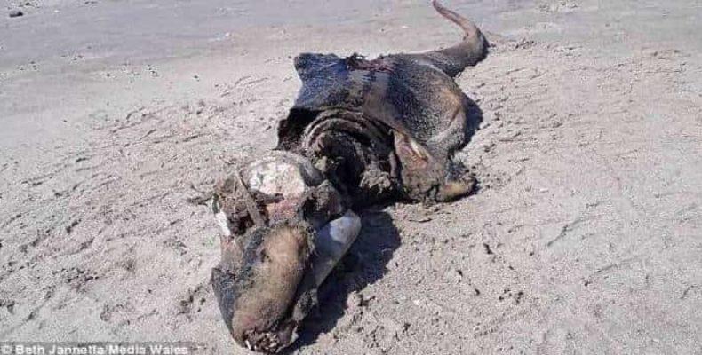 Более 50 мертвых акул вымыло на берег после того, как там было найдено странное существо