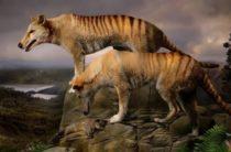 Сумчатый волк как истребленный вид Тасмании