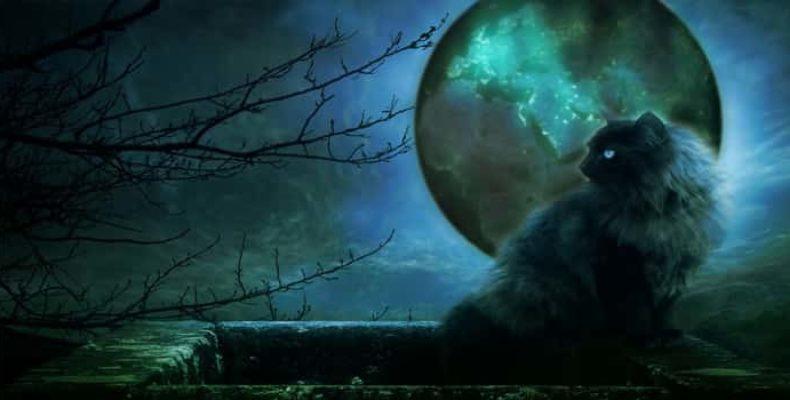 Самые таинственные кошки в истории человечества