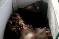 Громкий скандал в Джорджии: найдено тело снежного человека