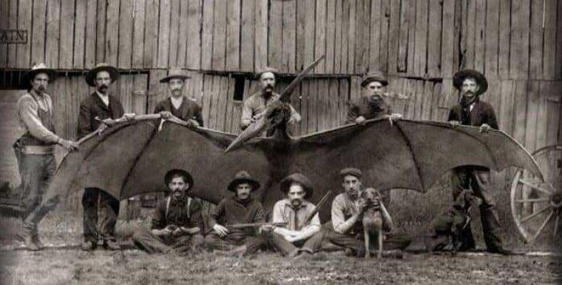 Тайна пропавшей фотографии тумстоунского птеродактиля