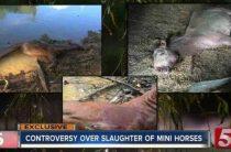 Неопознанное смертоносное существо на холмах Кентукки
