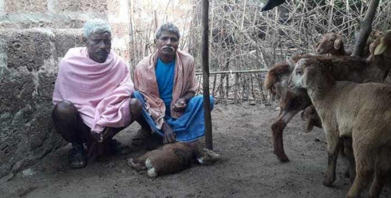 Смертельно опасное существо в Индии все еще на свободе