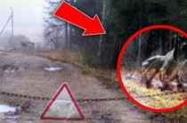 Ужасы Чернобыля: мутанты или иная форма жизни