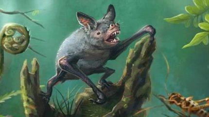 Найдены останки, вымершей 19 млн. лет назад, гигантской летучей мыши