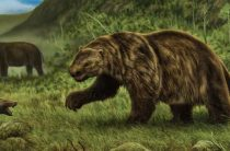 Они уже не с нами: несколько удивительных вымерших животных