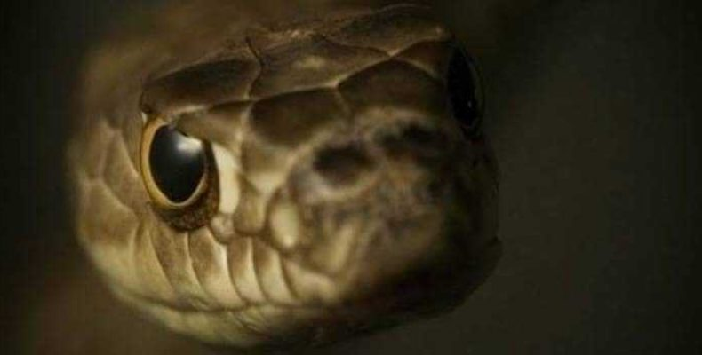 Кошмар наяву: гигантская змея