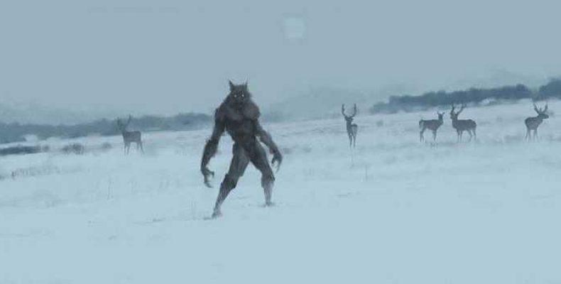 Группой охотников в Англии обнаружены следы «Лидского зверя»