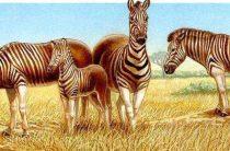 Удивительная зебра квагга