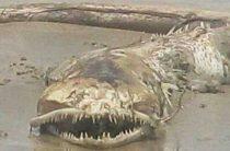 В Мексике обнаружено странное зубастое существо